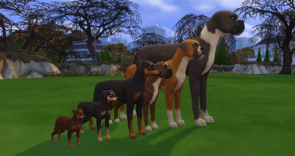 слайдер роста собак
